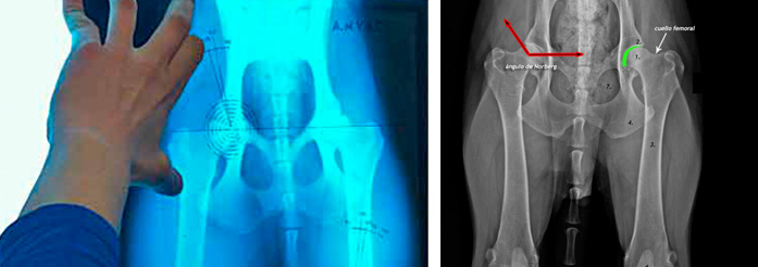 banner radiografia2