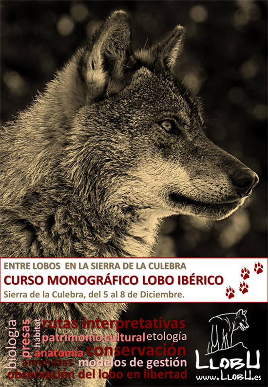 PROGRAMAcursoLOBOdiciembre2014LLOBU-1
